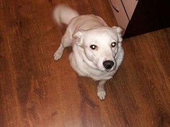 Просмотреть фото Продажа собак, щенков Отдам даром собаку 37293472 в Уфе