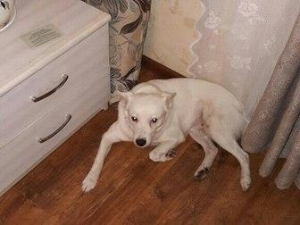 Скачать бесплатно фото Продажа собак, щенков Отдам даром собаку 37293472 в Уфе