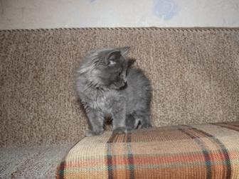 Скачать изображение Отдам даром Отдам котенка 37579350 в Уфе