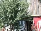 Скачать бесплатно foto Сады Дачный участок с большим домом, 32633849 в Ульяновске