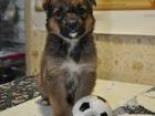 Фотография в Собаки и щенки Продажа собак, щенков Обаятельная и игривая девочка ищет доброго в Ульяновске 0