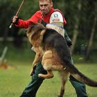 Дрессировка собак Видное Домодедово Подольск