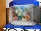 Фото в Рыбки (Аквариумистика) Аквариумные рыбки Продам аквариум, 100 литров. Без оборудо в Владикавказе 5000