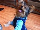 Фото в Собаки и щенки Вязка собак Возраст:1 год, вес - 4. 7 кг, документы имееются, в Владикавказе 0