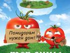 Смотреть фотографию  Теплицы для томатов Камешково 38579127 в Камешково