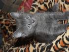 Фотки Домашняя кошка смотреть в Волгограде