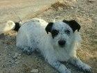 Фотография в Собаки и щенки Продажа собак, щенков Отдам в добрые руки собаку по имени Кекс. в Волгограде 0