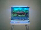 Foto в   Продам аквариум объемом 90 л. Водоросли, в Волгограде 4000