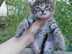 Домашняя кошка фото в Волгограде