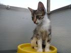 Свежее фото Отдам даром - приму в дар Отдам в добрые руки котят 37115235 в Волгограде