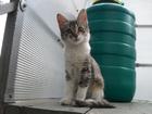 Фотография в Отдам даром - Приму в дар Отдам даром Отдадим красивых котят мальчика и девочку. в Волгограде 0