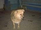 Фотография в   К пожарной части прибилась рыженькая собачка в Волгограде 0