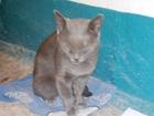 Скачать бесплатно foto Отдам даром Ласковый, добрый, умный котик ищет дом 37939864 в Волгограде