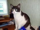 Просмотреть фотографию Отдам даром - приму в дар В добрые руки котята бесплатно 66340229 в Волгограде