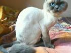 Просмотреть foto Услуги для животных Стрижка кошек и котов, с выездом на дом, 67764643 в Волгограде