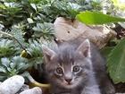 Свежее изображение Отдам даром - приму в дар Отдам котят в добрые руки 67792845 в Волгограде