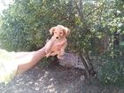 Смотреть фотографию Отдам даром - приму в дар Беспородные щеночки для частного дома, 76701751 в Волгограде
