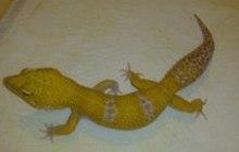 Продажа рептилий в Волгограде