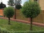 Уникальное фото Другие строительные услуги Благоустройство и озеленение, 38803005 в Вологде