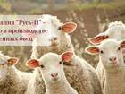 Свежее фото Транспорт, грузоперевозки Племенное овцеводство (романовская овца) и производство кормов для скота, 39302729 в Москве