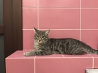 Смотреть фото Потерянные помогите найти кота 39196891 в Воронеже