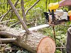 Скачать бесплатно фото Ландшафтный дизайн Опил деревьев, покос травы триммером в Воронеже 56861056 в Воронеже