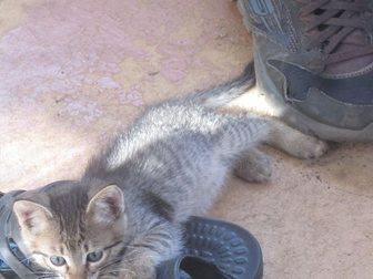 Скачать фото Отдам даром отдам даром котёнка 33482329 в Воронеже