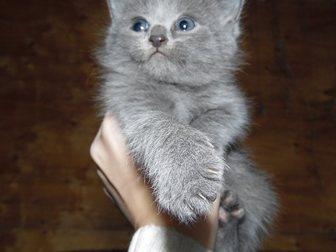 Увидеть фото Отдам даром Отдадим котят в хорошие руки 33753372 в Воронеже