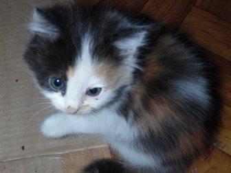 Свежее фото Отдам даром Отдадим котят в хорошие руки 33753372 в Воронеже