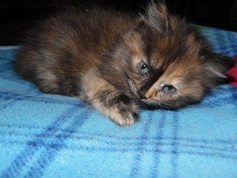 Скачать изображение Отдам даром Отдадим котят в хорошие руки 33753372 в Воронеже