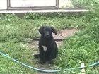 Фото в Собаки и щенки Продажа собак, щенков Миленький щенок ищет своих хозяев. в Выксе 0