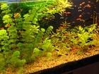 Скачать изображение Аквариумные рыбки Рыбки аквариумные, грунт, растения 39671387 в ВышнемВолочке