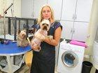 Смотреть изображение Услуги для животных Стрижка собак и кошек: совершенство и стиль от компании «Модный дом», 32678454 в Зеленограде