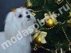 Скачать фото Услуги для животных Салонные стрижки собак и комплексный уход 32696400 в Зеленограде