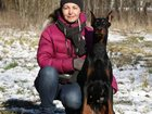 Фото в Домашние животные Услуги для животных Обучение щенков и взрослых собак с помощью в Зеленограде 300