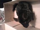 Фото в Домашние животные Грызуны ШИНШИЛЛА МАЛЬЧИК ТЕМНО-СЕРЫЙ ОЧЕНЬ ОБШИТ в Зеленограде 1000