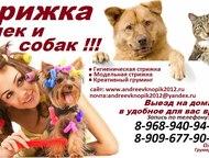 стрижка животных выезд на дом,Стрижка кошек и собак Предлагаем к вашему вниманию
